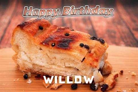 Willow Birthday Celebration